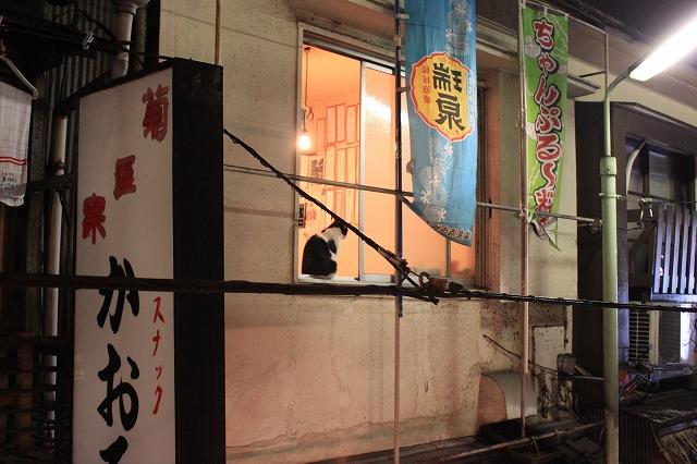 西荻窪、「ハンサム食堂」の向かいの看板の猫