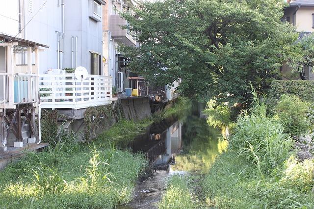 静岡県三島市のやたらきれいな川で川遊びしてきた