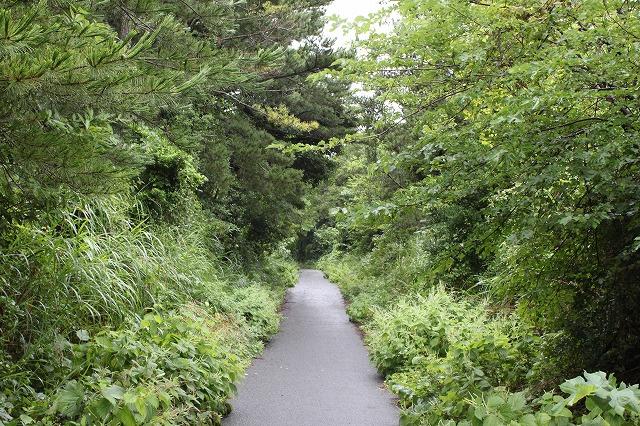 田代島の道画像だよ