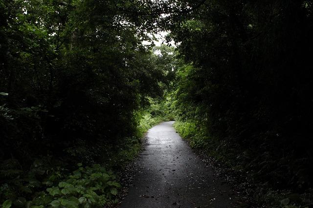 田代島の素敵な道画像だよ