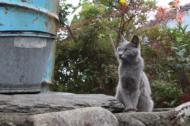 田代島の美人猫画像