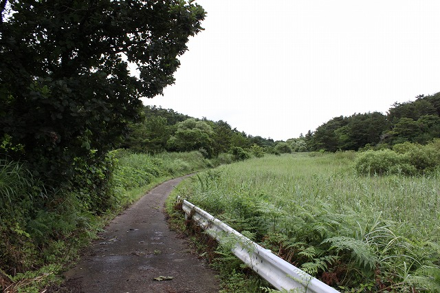 田代島の素敵道な画像だよ