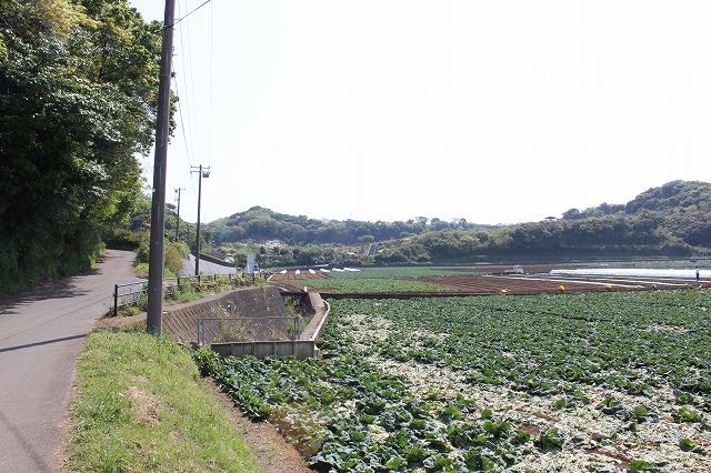 三浦海岸、「XJAPAN hideのお墓参り」道道
