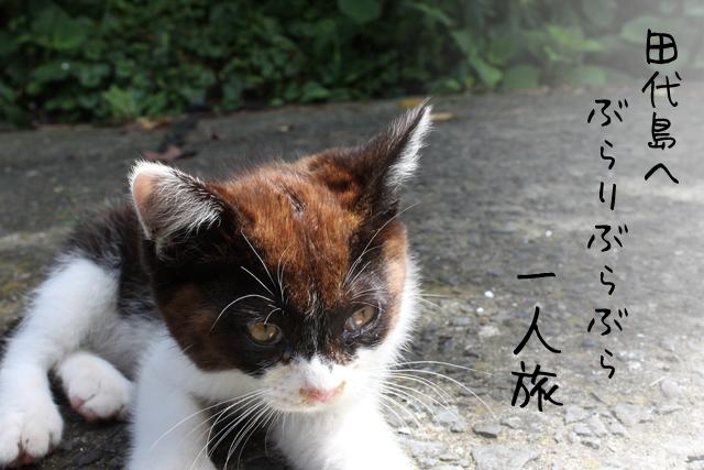 猫の島で有名な田代島へいってみたよ!自然もいっぱい!
