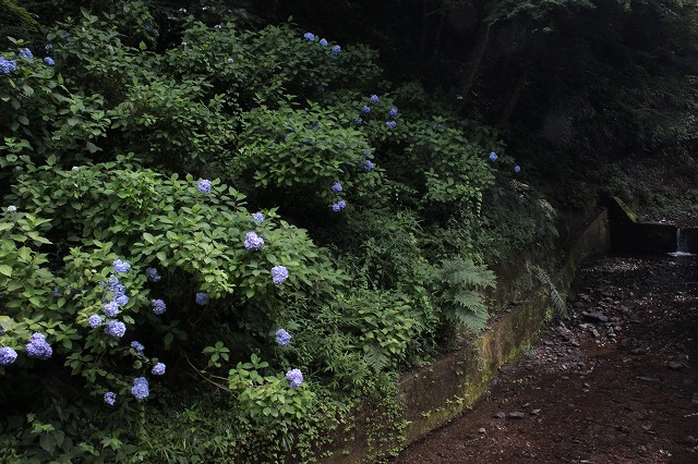 登山者数世界一、「高尾山」の自然研究路6号路を歩いてきた。_0140.jpg
