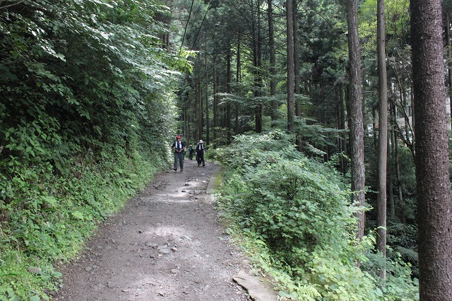 登山者数世界一、「高尾山」の自然研究路6号路を歩いてきた。_0163.jpg