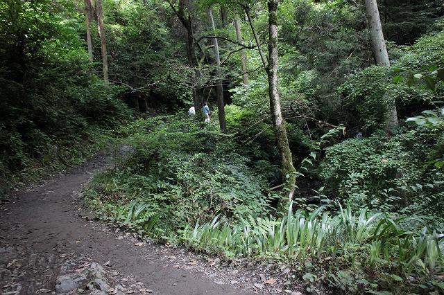登山者数世界一、「高尾山」の自然研究路6号路を歩いてきた。_0167.jpg