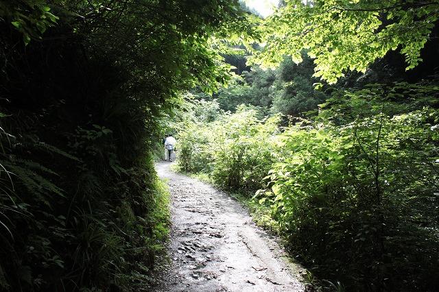 登山者数世界一、「高尾山」の自然研究路6号路を歩いてきた。_0178.jpg