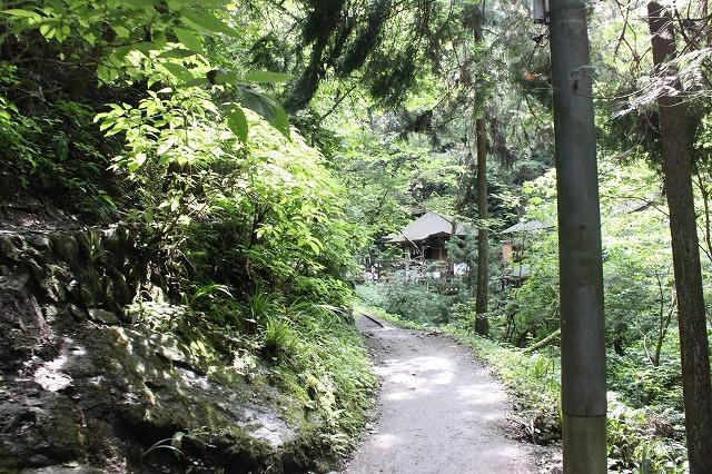 登山者数世界一、「高尾山」の自然研究路6号路を歩いてきた。_0190.jpg