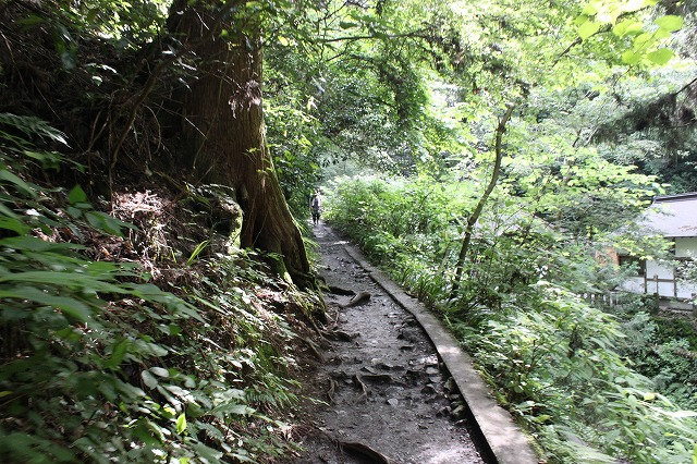 登山者数世界一、「高尾山」の自然研究路6号路を歩いてきた。_0201.jpg
