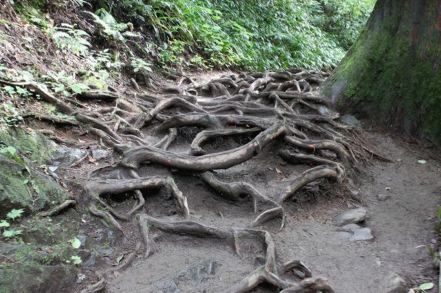 登山者数世界一、「高尾山」の自然研究路6号路を歩いてきた。_0209.jpg