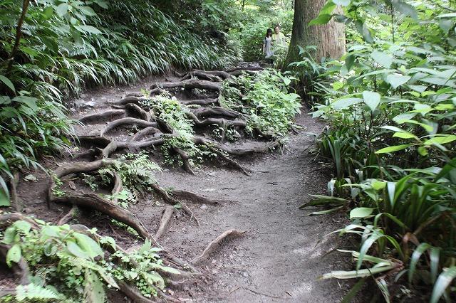 登山者数世界一、「高尾山」の自然研究路6号路を歩いてきた。_0212.jpg