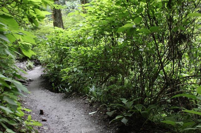 登山者数世界一、「高尾山」の自然研究路6号路を歩いてきた。_0217.jpg