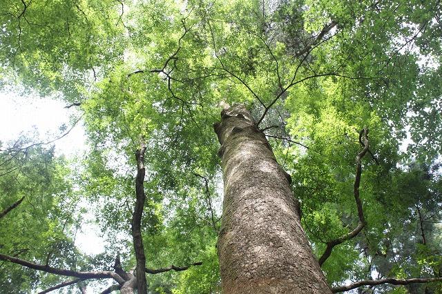 登山者数世界一、「高尾山」の自然研究路6号路を歩いてきた。_0222.jpg