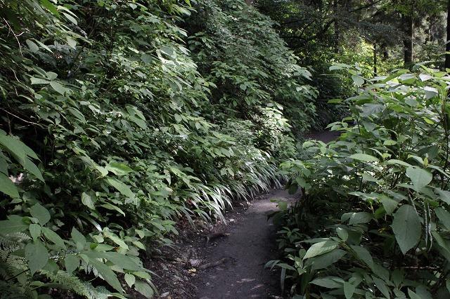 登山者数世界一、「高尾山」の自然研究路6号路を歩いてきた。_0234.jpg