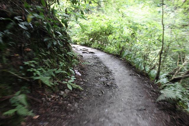 登山者数世界一、「高尾山」の自然研究路6号路を歩いてきた。_0252.jpg
