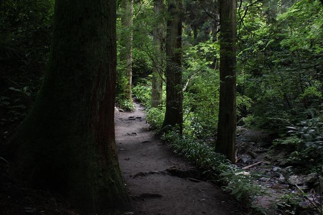 登山者数世界一、「高尾山」の自然研究路6号路を歩いてきた。_0262.jpg