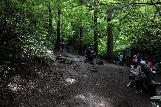 登山者数世界一、「高尾山」の自然研究路6号路を歩いてきた。_0265.jpg