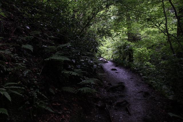 登山者数世界一、「高尾山」の自然研究路6号路を歩いてきた。_0272.jpg