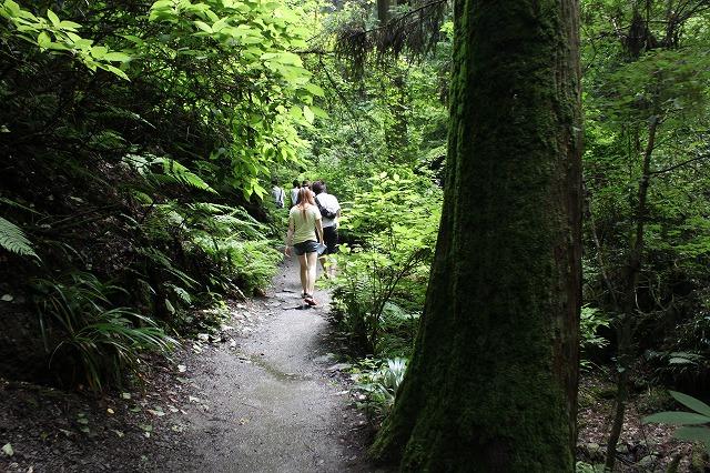 登山者数世界一、「高尾山」の自然研究路6号路を歩いてきた。_0293.jpg