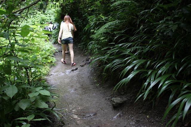 登山者数世界一、「高尾山」の自然研究路6号路を歩いてきた。_0301.jpg
