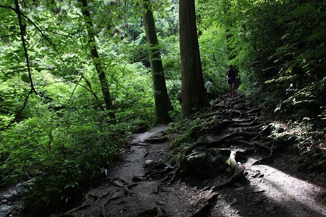登山者数世界一、「高尾山」の自然研究路6号路を歩いてきた。_0314.jpg