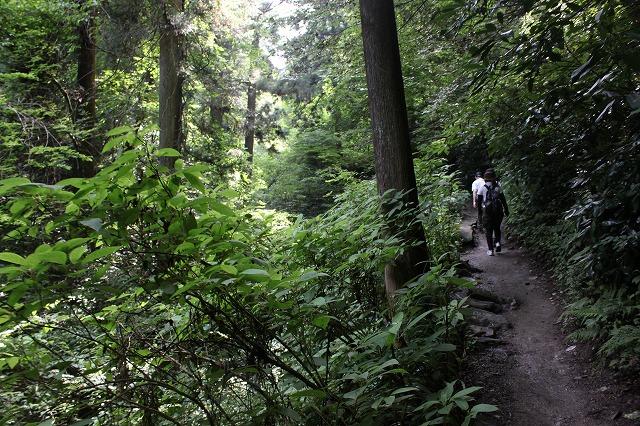 登山者数世界一、「高尾山」の自然研究路6号路を歩いてきた。_0320.jpg