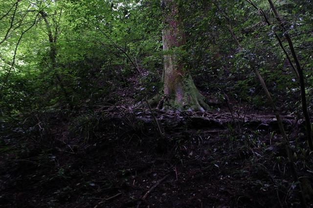 登山者数世界一、「高尾山」の自然研究路6号路を歩いてきた。_0328.jpg