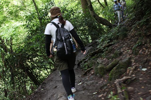 登山者数世界一、「高尾山」の自然研究路6号路を歩いてきた。_0332.jpg