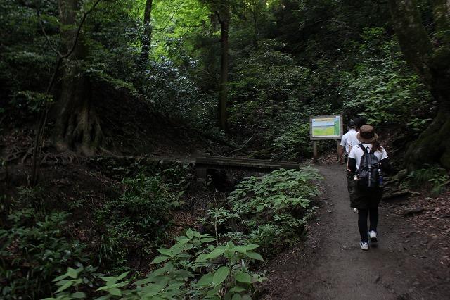 登山者数世界一、「高尾山」の自然研究路6号路を歩いてきた。_0347.jpg