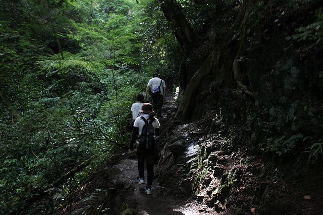 登山者数世界一、「高尾山」の自然研究路6号路を歩いてきた。_0356.jpg