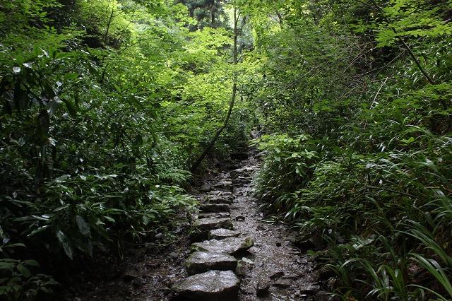 登山者数世界一、「高尾山」の自然研究路6号路を歩いてきた。_0360.jpg