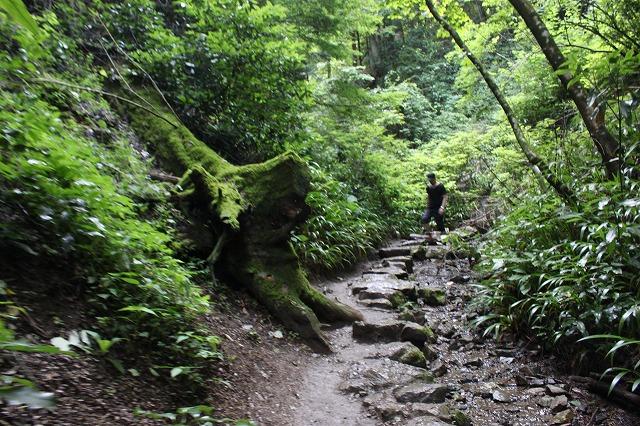 登山者数世界一、「高尾山」の自然研究路6号路を歩いてきた。_0367.jpg
