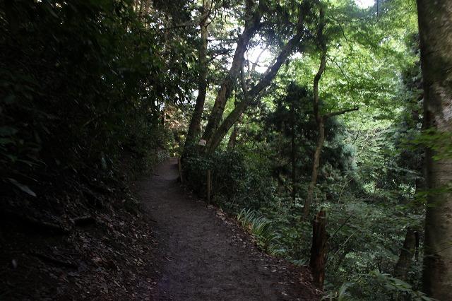 登山者数世界一、「高尾山」の自然研究路6号路を歩いてきた。_0375.jpg