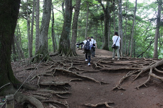 登山者数世界一、「高尾山」の自然研究路6号路を歩いてきた。_0394.jpg