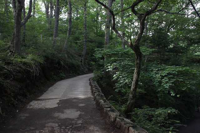 登山者数世界一、「高尾山」の自然研究路6号路を歩いてきた。_0401.jpg