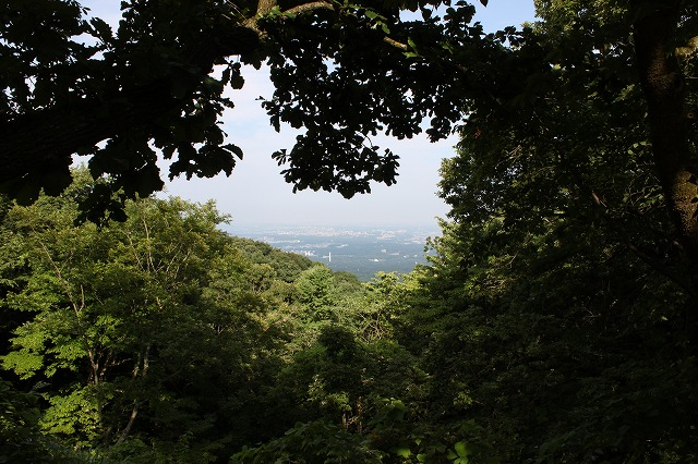 登山者数世界一、「高尾山」の自然研究路6号路を歩いてきた。_0430.jpg