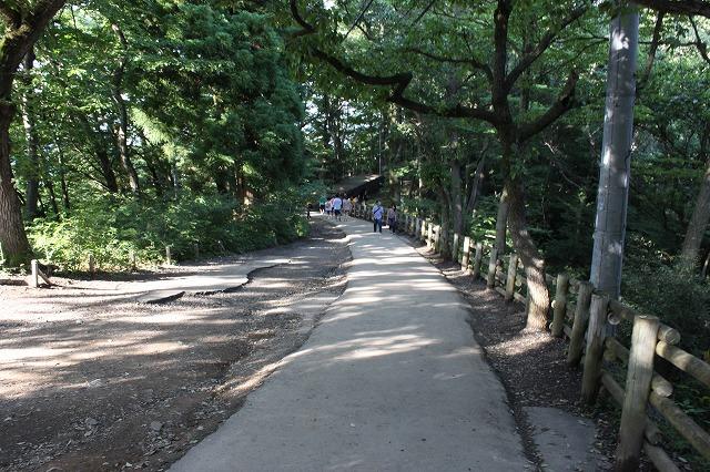 登山者数世界一、「高尾山」の自然研究路6号路を歩いてきた。_0484.jpg