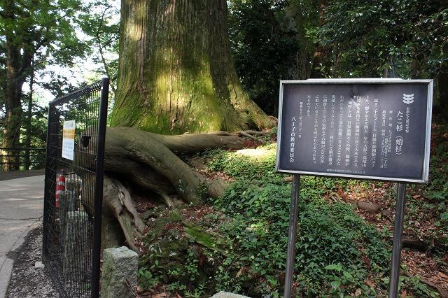 登山者数世界一、「高尾山」の自然研究路6号路を歩いてきた。_0576.jpg