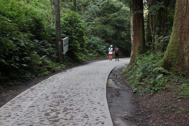 登山者数世界一、「高尾山」の自然研究路6号路を歩いてきた。_0618.jpg